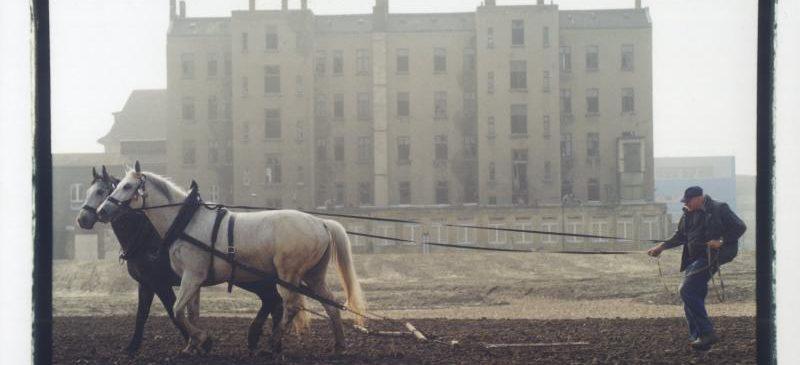 Denkmalsenthüllung »MAN AND HORSES ON MILLENNIUM FIELD«
